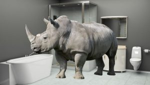 rhinoceros in the bathroom